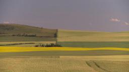 HD2008-7-16-58 canola wheat fields patterns Stock Video Footage