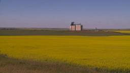 HD2008-7-16-60 canola fields grain elevators Footage