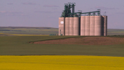 HD2008-7-16-64 canola fields grain elevators Stock Video Footage