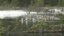 HD2008-6-3-38 deadfalls on pond Stock Video Footage