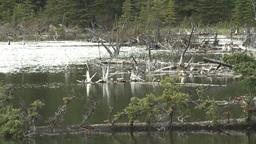 HD2008-6-3-38 deadfalls on pond Stock Video Footage
