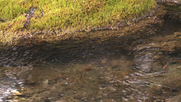 HD2008-6-3-40 mossy stream Stock Video Footage