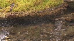HD2008-6-3-40 mossy stream Stock Video Footage