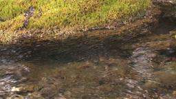 HD2008-6-3-40 mossy stream Footage