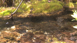 HD2008-6-3-42 mossy stream Stock Video Footage