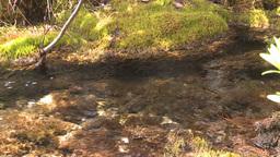 HD2008-6-3-42 mossy stream Footage