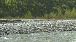 HD2008-6-3-48 elbow river and forest Stock Video Footage