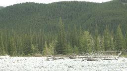 HD2008-6-3-54 forest and rocky beach Stock Video Footage