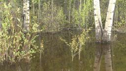 HD2008-6-3-66 swamp marsh Stock Video Footage
