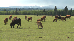 HD2008-6-4-8 cattle ranch distant rain Stock Video Footage
