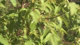 HD2008-6-4-32 Sun On Rainy Leaves stock footage