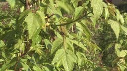 HD2008-6-4-32 sun on rainy leaves Stock Video Footage