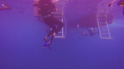 group of scuba divers with fish swimming underneat Footage
