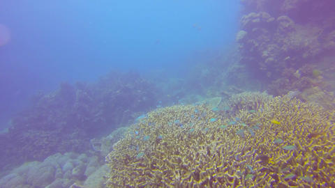 many small colorful blue fish swim above the coral Stock Video Footage