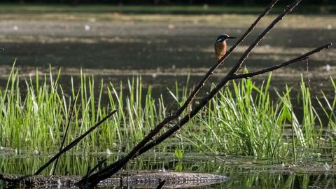 Kingfisher 3 Footage