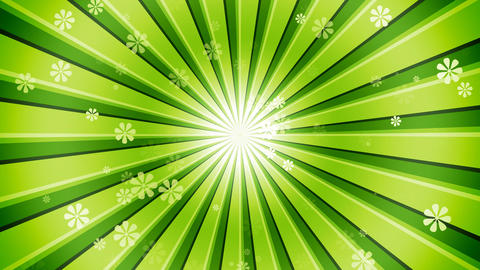Green Sun Burst Flowers Stock Video Footage