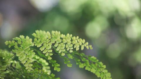 fern in a breeze Stock Video Footage