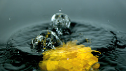 Yellow pepper falling in water close up Stock Video Footage