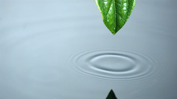 Droplet running off leaf into water pool Live Action