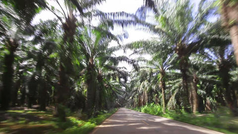 car traveling on the paved road of date palms Stock Video Footage