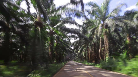 car traveling on the paved road of date palms Footage