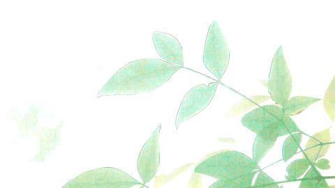 bright leaves Footage