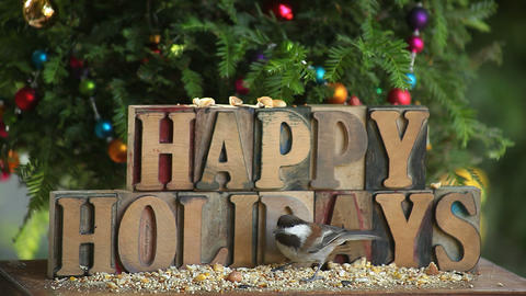 Happy Holidays Word With Tree And Bird stock footage