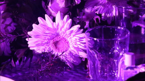 glasses and flowers are on the table Footage