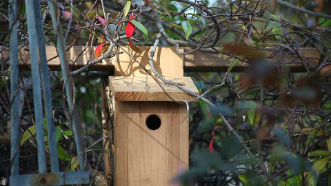 chickadee checks out birdhouse Footage