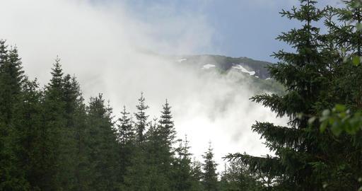 4K, Fog in the woods, Norway Footage