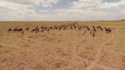 Aerial view. Savanna Stock Video Footage