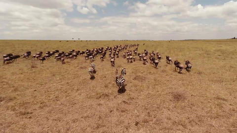 Aerial view. Savanna Footage
