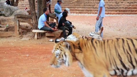 BANGKOK, THAILAND - FEBRUARY 2014: People with tig Footage