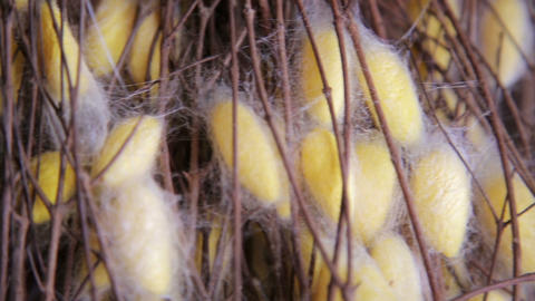 Silk Farm, clothes produce from silkworm insects c Stock Video Footage