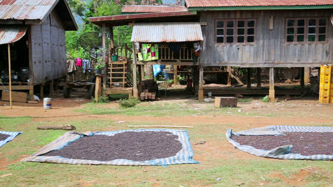 BOLAVEN PLATEAU, PAKSE, LAOS - MARCH 2014: coffee Stock Video Footage