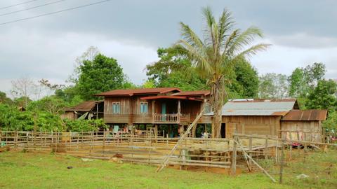 Lao village life around coffee planted Bolaven Pla Footage