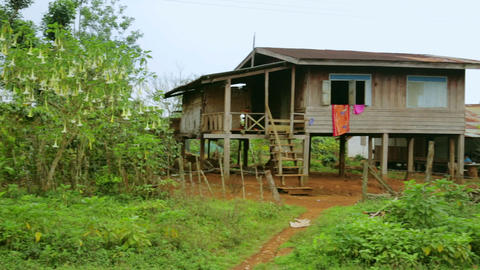 Lao village house with full of orchids flovers, Pa Footage