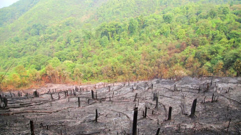 Deforestation, After Forest Fire, Natural Disaster stock footage