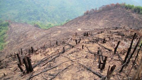 Deforestation, after forest fire, natural disaster Footage