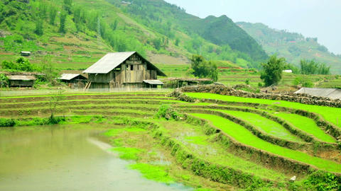 gorgeous farm fields, rice paddy terraces, Sapa, V Footage