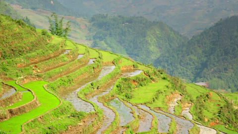 gorgeous farm fields, rice paddy terraces, Sapa, V Stock Video Footage