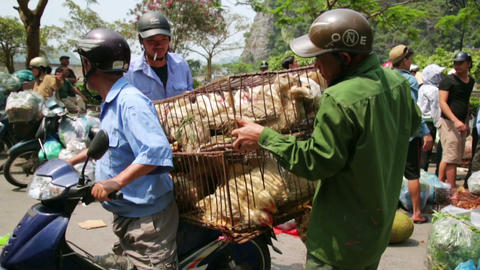 HALONG BAY, VIETNAM - MAY 2014: Carrying market wi Stock Video Footage