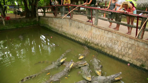 MEKONG DELTA, VIETNAM - MAY 2014: Crocodile farm Footage