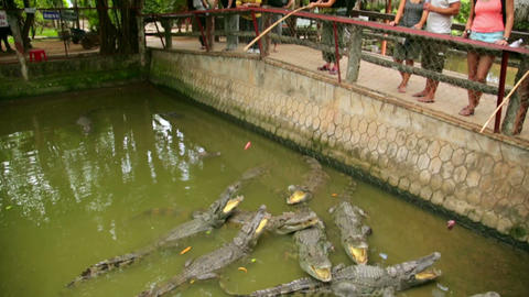 MEKONG DELTA, VIETNAM - MAY 2014: Crocodile farm Stock Video Footage