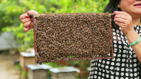 Holding honey beehive bare hand Footage