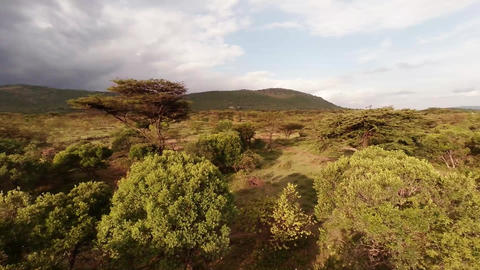 Savanna. Aerial shot Footage