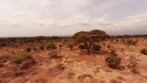 Aerial shot of the savannah Footage