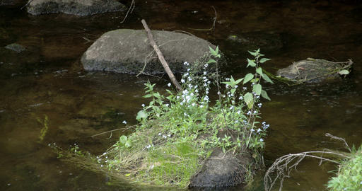 Plants growing on the rock in the middle of the st Stock Video Footage