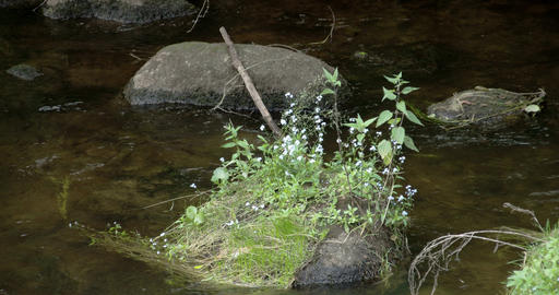 Plants growing on the rock in the middle of the st Footage