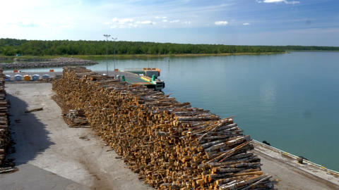 Lots of pulpwood on the harbour of Estonia ready f Footage